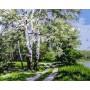 Картина-раскраска по номерам «Белая береза» 40*50 см