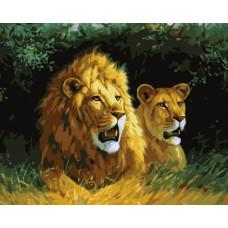 Картина-раскраска по номерам «Львы» 40*50 см