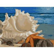 Картина-раскраска по номерам «Морская ракушка» 30*40 см