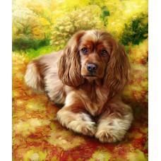 Картина-раскраска по номерам «Спаниель» 40*50 см