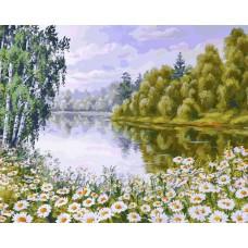 Картина-раскраска по номерам «В ромашковом краю» 40*50 см