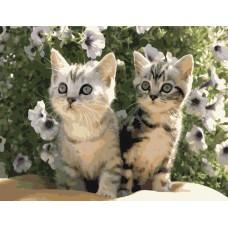 Картина-раскраска по номерам «Два котенка» 40*50 см