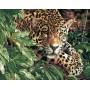 Леопард в кустах