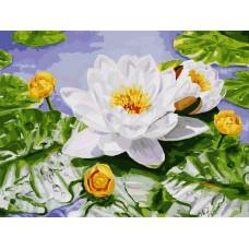 Картина-раскраска по номерам «Нимфея озерная» 30*40 см