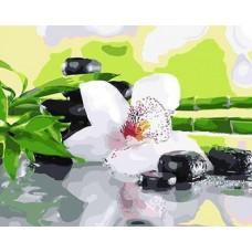 Картина-раскраска по номерам «Орхидея и бамбук» 40*50 см