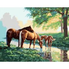 Картина-раскраска по номерам «Скакуны на водопое» 40*50 см