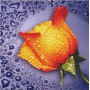 Алмазная мозаика «Желтая роза» 25*25 см