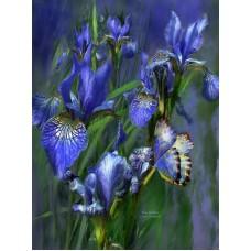Картина-раскраска по номерам «Бабочка и ирисы» 40*50 см