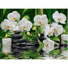 Картина-раскраска по номерам «Белые орхидеи» 30*40 см