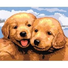 Картина-раскраска по номерам «Два щенка» 30*40 см
