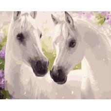 Картина-раскраска по номерам «Две белых лошади» 40*50 см