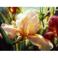 Картина-раскраска по номерам «Ирисы бледно и тёмно-розовые» 40*50 см