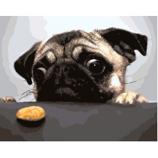 Картина-раскраска по номерам «Мопс и орех» 40*50 см