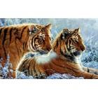 Тигры на снегу