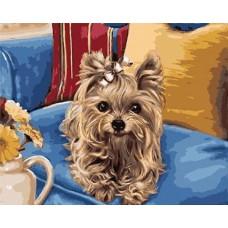 Картина-раскраска по номерам «Йорк на кресле» 40*50 см