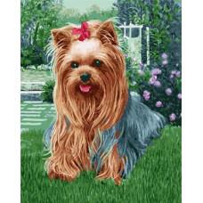 Картина-раскраска по номерам «Йорк на траве» 40*50 см